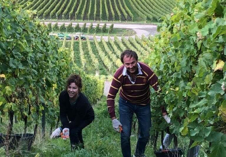 Andrew and Lisa Margan climbing the steep vineyard of Trabener Wurtzgarten on the Mosel to pick riesling