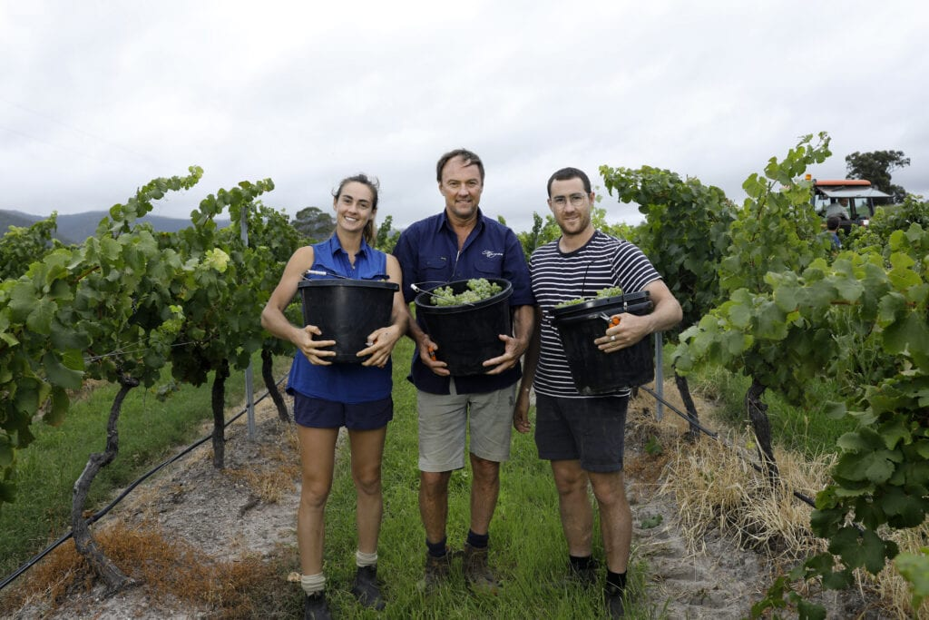 Alessa, Andrew and Ollie handpicking our Ceres Hill Semillon. Photographed by Chris Elfes.