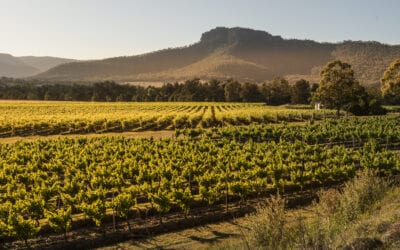Switched on Vignerons: Why the Hunter Valley is back in the hunt