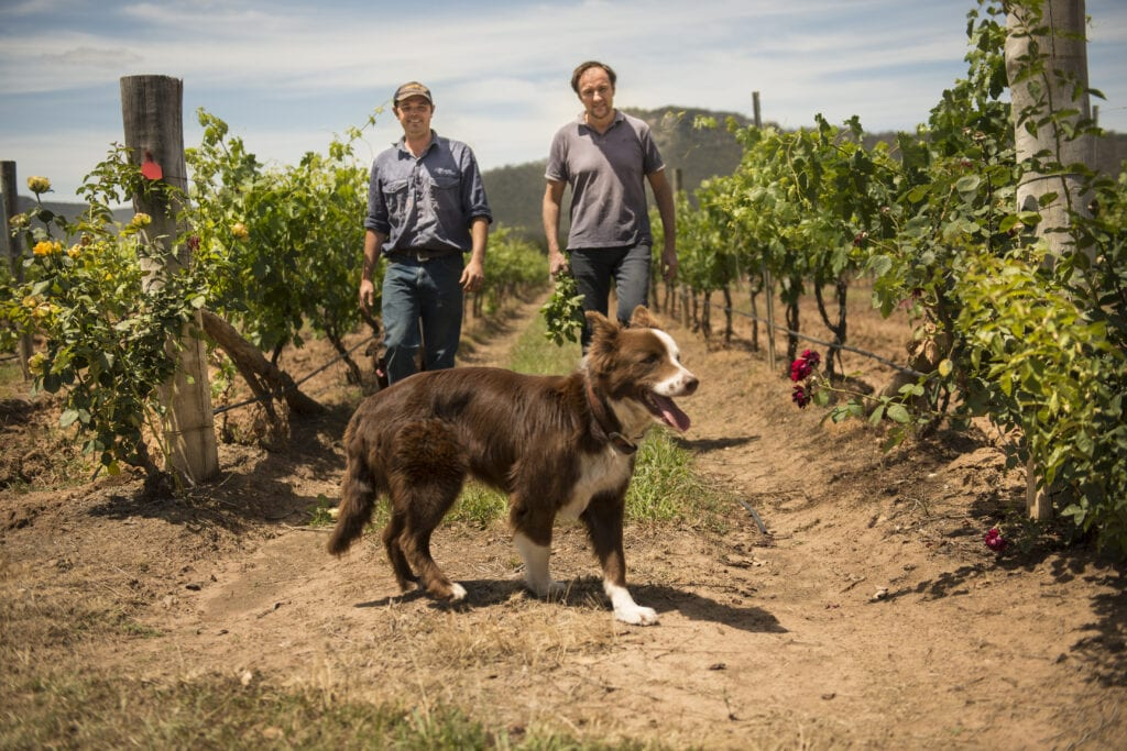 Andrew Margan, winemaker, and Nic Looby, vineyard manager walk through our Ceres Hill vineyards