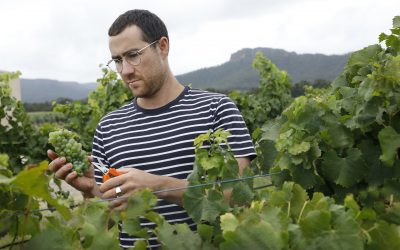 A new chapter for this Hunter Valley single-estate vineyard